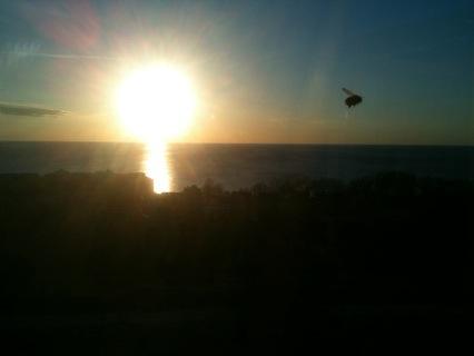 Tordyveln flyger i solnedgången